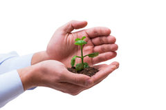 The hand holding seedling in new life concept on white Stock Photo