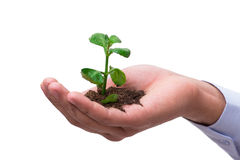 The hand holding seedling in new life concept on white Royalty Free Stock Images