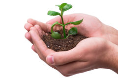 The hand holding seedling in new life concept on white Stock Image