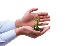 The hand holding seedling in new life concept on white Royalty Free Stock Photo