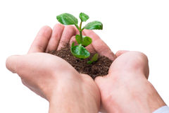 The hand holding seedling in new life concept on white Royalty Free Stock Photography