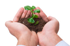 The hand holding seedling in new life concept on white Royalty Free Stock Image