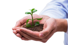 The hand holding seedling in new life concept on white Stock Photos