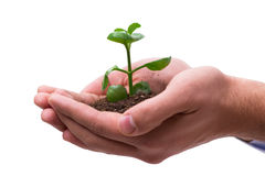 The hand holding seedling in new life concept on white Royalty Free Stock Photos