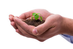The hand holding seedling in new life concept on white Stock Photography