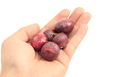 Hand holding a shallot Stock Images