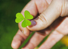 Hand holding shamrock. In the forest Stock Photo