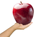 Hand Holding Shiny Big Red Apple Isolated Royalty Free Stock Images