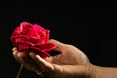 Hand holding single romantic red rose black background. Single romantic red rose, symbolic for love, on black background a gift for loved one on Valentines or Royalty Free Stock Photos