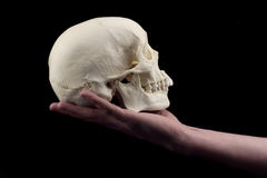 Hand holding skull Royalty Free Stock Images