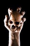 Hand holding skull Royalty Free Stock Image