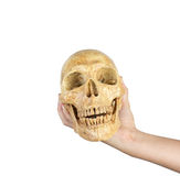 Hand holding skull isolated on white background Stock Photo