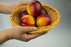 A hand holding a small basket, basket filled with  Royalty Free Stock Photo