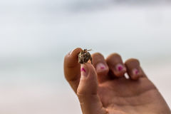 Hand holding a small crab in hand in front of a beach. Stock Images