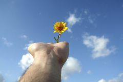 Hand holding small flower. Human hand holding small flower in the sky Royalty Free Stock Photography