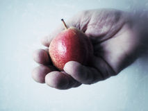 Hand holding small pear Royalty Free Stock Photography