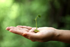 Hand holding small plant Stock Images