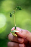 Hand holding small plant Royalty Free Stock Images
