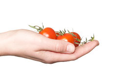 Hand holding small tomatoes. Woman hand holding small tomatoes Royalty Free Stock Image