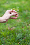 Hand holding a small tree over green Stock Image
