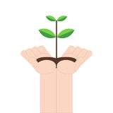 Hand holding small tree on white background, vector illustration in flat design Royalty Free Stock Photo
