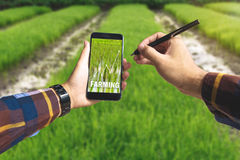 Hand holding smart phone and electronic pen with farming text an. D up trends income chart on screen over rice field background for Ecology Farming Agriculture Royalty Free Stock Photo