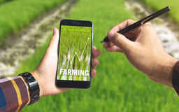 Hand holding smart phone and electronic pen with farming text an. D up trends income chart on screen over rice field background for Ecology Farming Agriculture Stock Photography