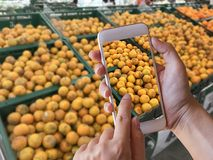 Hand holding smartphone with blurred tangerines background. In supermarket Royalty Free Stock Photos