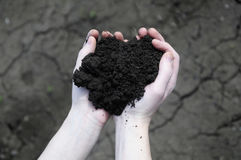 Hand holding soil, dry soil on background Stock Image