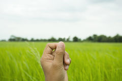 Hand holding something with field background. Hand holding something on field background stock photos
