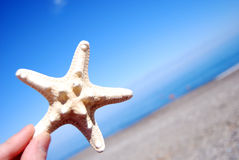 Hand Holding Starfish Stock Images