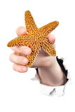 Hand  holding starfish Stock Images