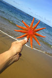 Hand Holding Starfish Royalty Free Stock Photo