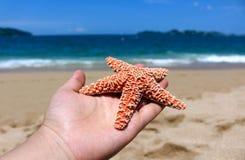 Hand holding a starfish Stock Photo