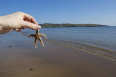 Hand holding a Starfish Stock Images