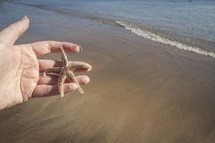 Hand holding a Starfish Royalty Free Stock Photography