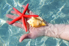 Hand holding starfish and seashell Stock Images