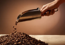 Hand holding steel scoop and coffee beans Stock Images