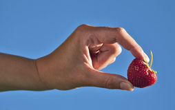 Hand holding a strawberry Stock Photo