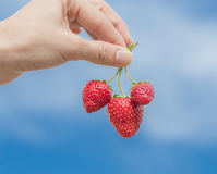 Hand holding strawberry with blue sky Stock Photos