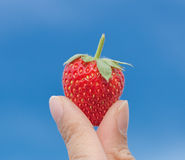 Hand holding strawberry with blue sky Royalty Free Stock Image