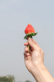 Hand holding a strawberry. A hand holding a fresh picked strawberry against a blue sky background Stock Photography