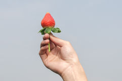 Hand holding a strawberry. A hand holding a fresh picked strawberry against a blue sky background Royalty Free Stock Photography