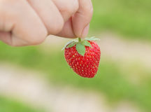 Hand holding strawberry with green background Royalty Free Stock Photos