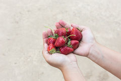 Hand holding strawberry on ground background Stock Images