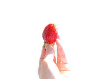 A hand holding strawberry Stock Photos