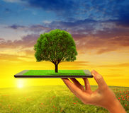 Hand holding tablet computer with tree Stock Photo