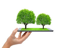 Hand holding tablet computer with trees Stock Image