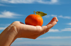 Hand holding a tangerine with leaf Stock Photos