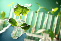 Hand holding a test tube with plant Stock Image